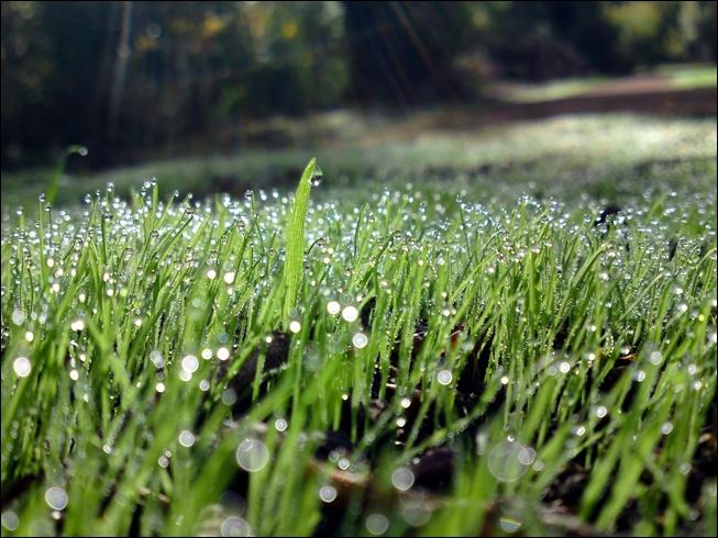 Dew Factor in Cricket